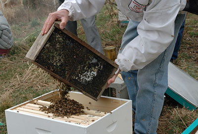 Jim pouring bees