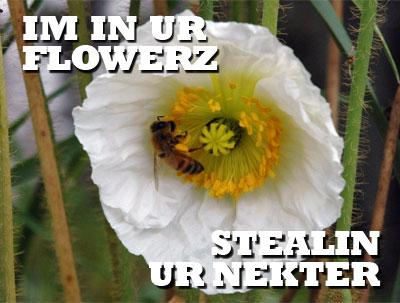 im in ur flowerz, stealin ur nekter
