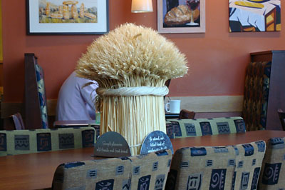 Sheaf at Panera Bread